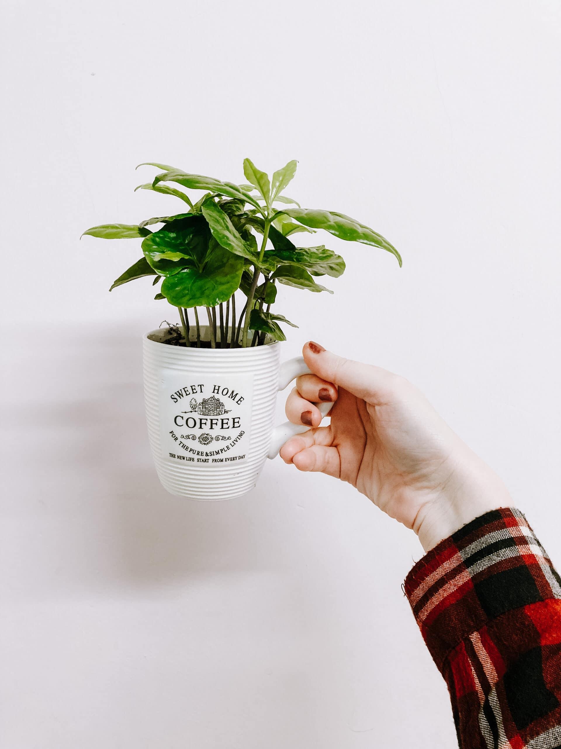 Quels avantages d'un mur végétal en entreprise ?